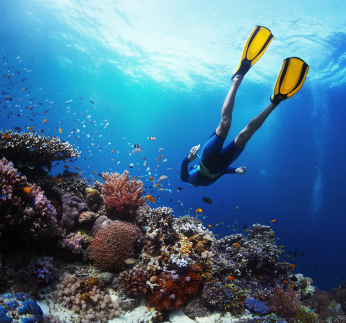 Best Snorkel Spots in Puerto Vallarta